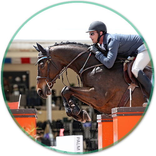 Clermark Equestrian Brock Clermont Hunter Jumper And